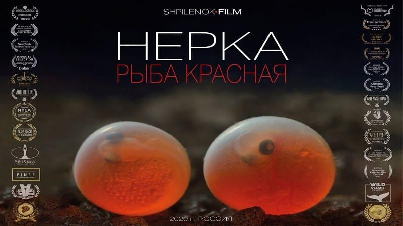 Постер Нерка. Рыба красная